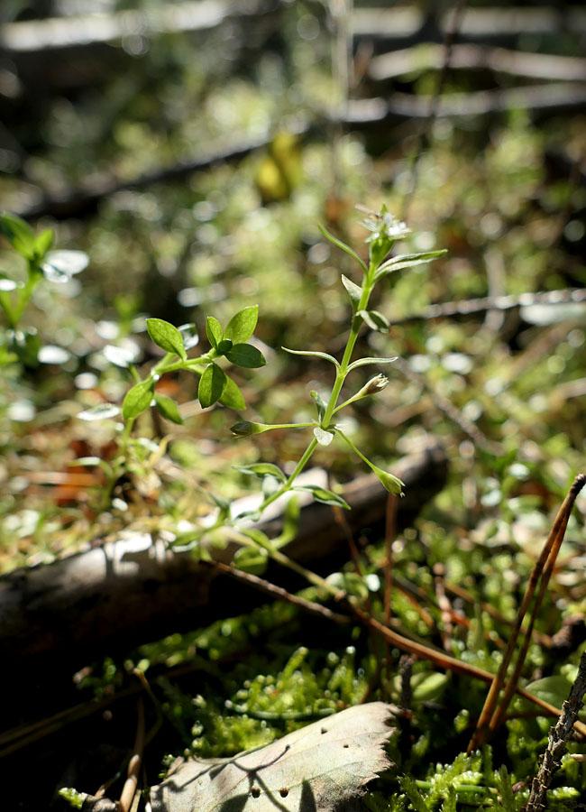 Waldpilze