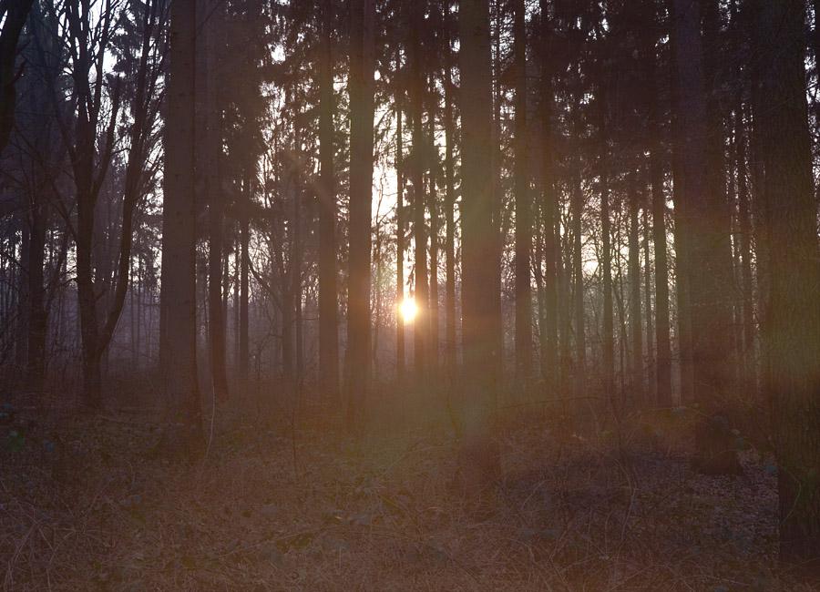Waldmotive mit Bokeh