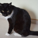 Fibrosarkom bei Katzen