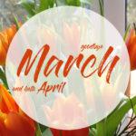 Meine Highlights im März 2017